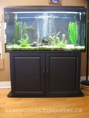 aquarium 77 gallons 224 vendre animaux poissons 01 annonces